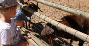Imhoff Farm Higgeldy Piggeldy Farmyard