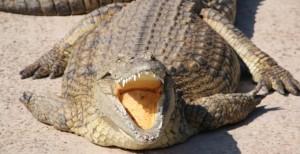 Le Bonheur Crocodile Farm