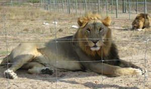 lionpark