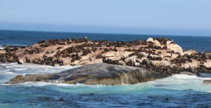 Seal Colony Tours from Hout Bay Harbour