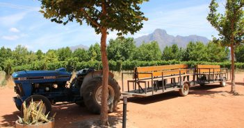 solms delta