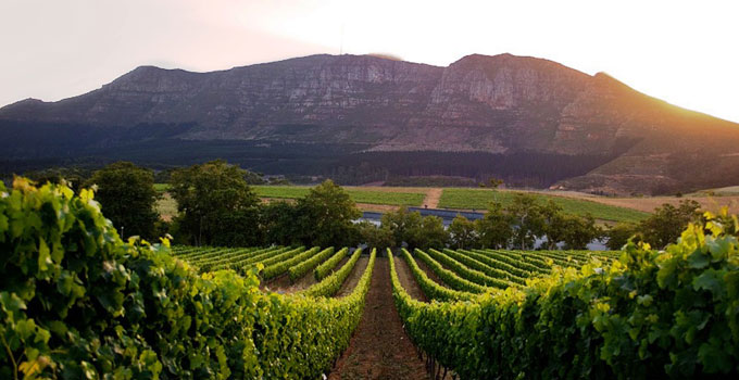 Overview Of The Cape Winelands Love My Cape Town
