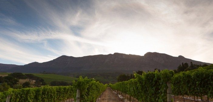 Majestic Cape Winelands