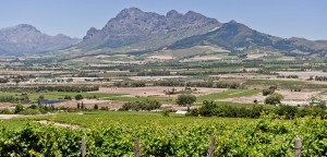 Fairview Wine Farm