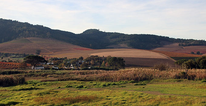 Mulderbosch Vineyards
